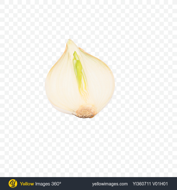 Download Half of White Onion Bulb Transparent PNG on YELLOW Images