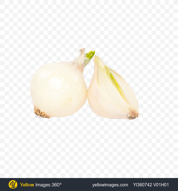 Download Onion Bulb and Half Transparent PNG on YELLOW Images