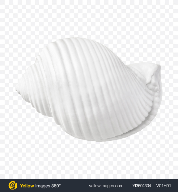 Download Ceramic Shell Transparent PNG on YELLOW Images