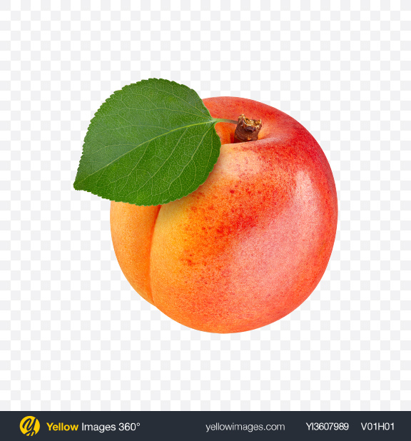 Download Apricot Transparent PNG on YELLOW Images